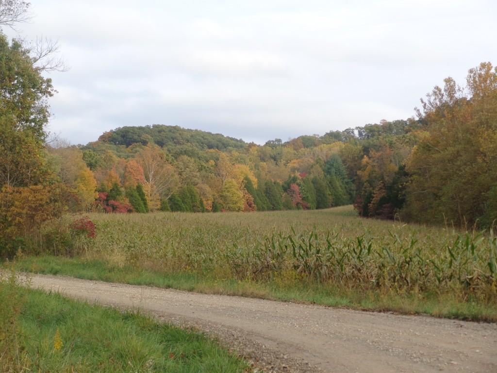 Autumn-in-Indiana